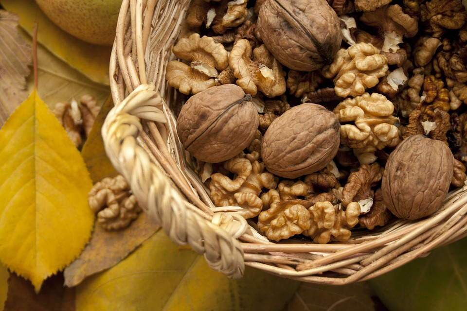 nuts-1620814_960_720