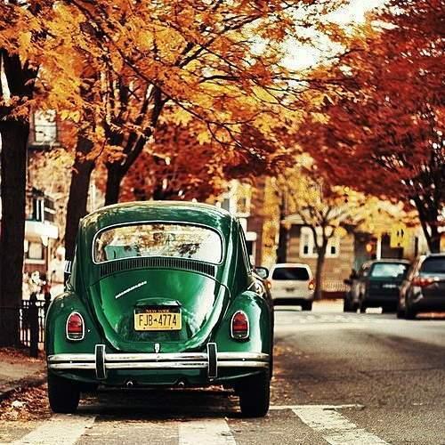 autumn-car
