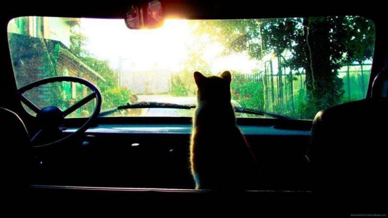 hipster-tumblr-wallpaper-cat-wallpapers