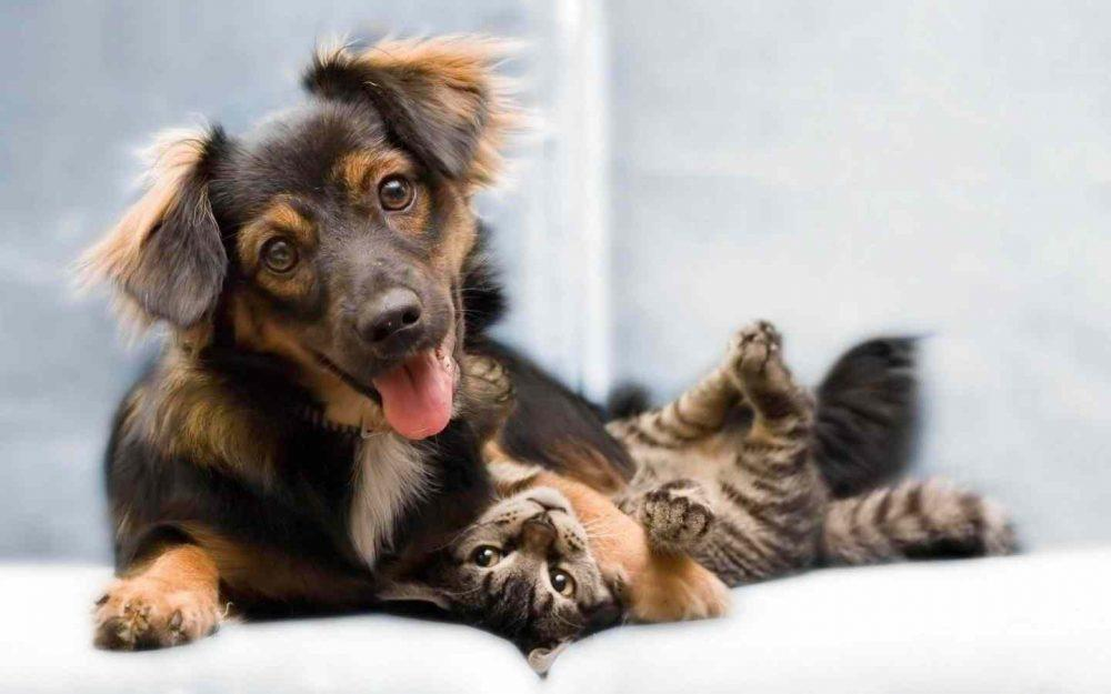 happy-dog-and-cat