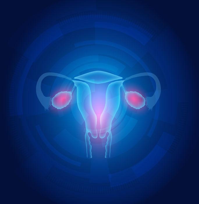 Γυναικείο γεννητικό σύστημα