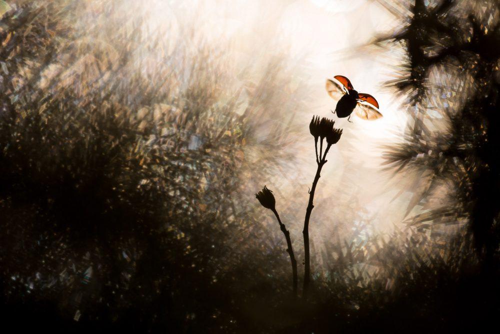 φύσης