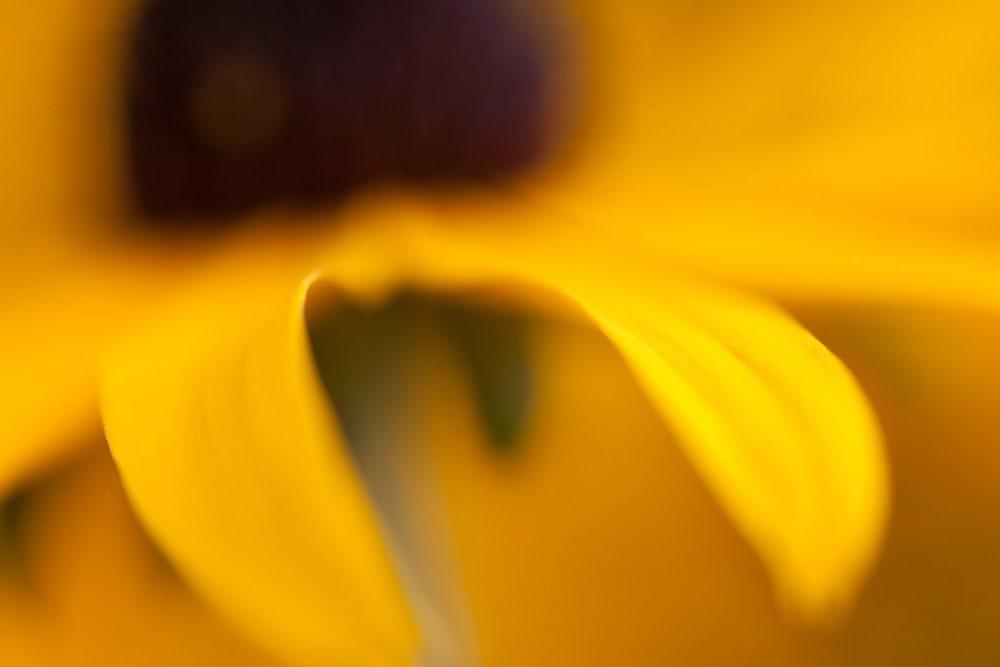 λουλουδιών