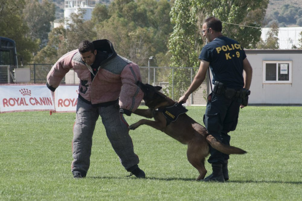 Τμήμα Συνοδών Αστυνομικών Σκύλων:
