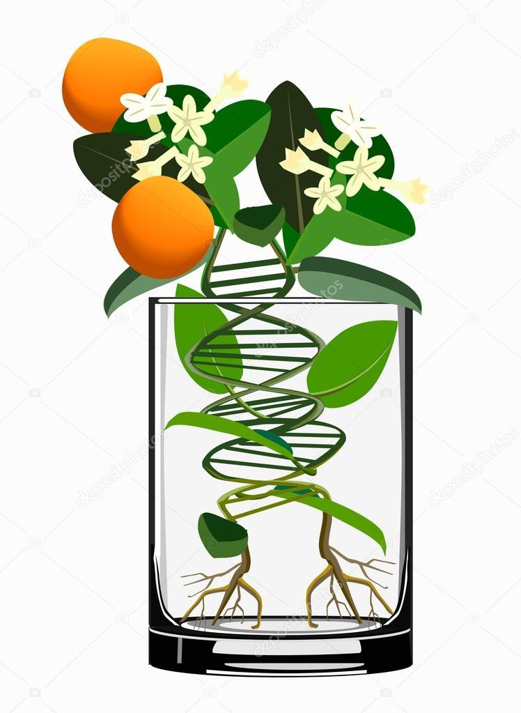 https://gr.depositphotos.com/17837645/stock-illustration-transgenic-plants.html