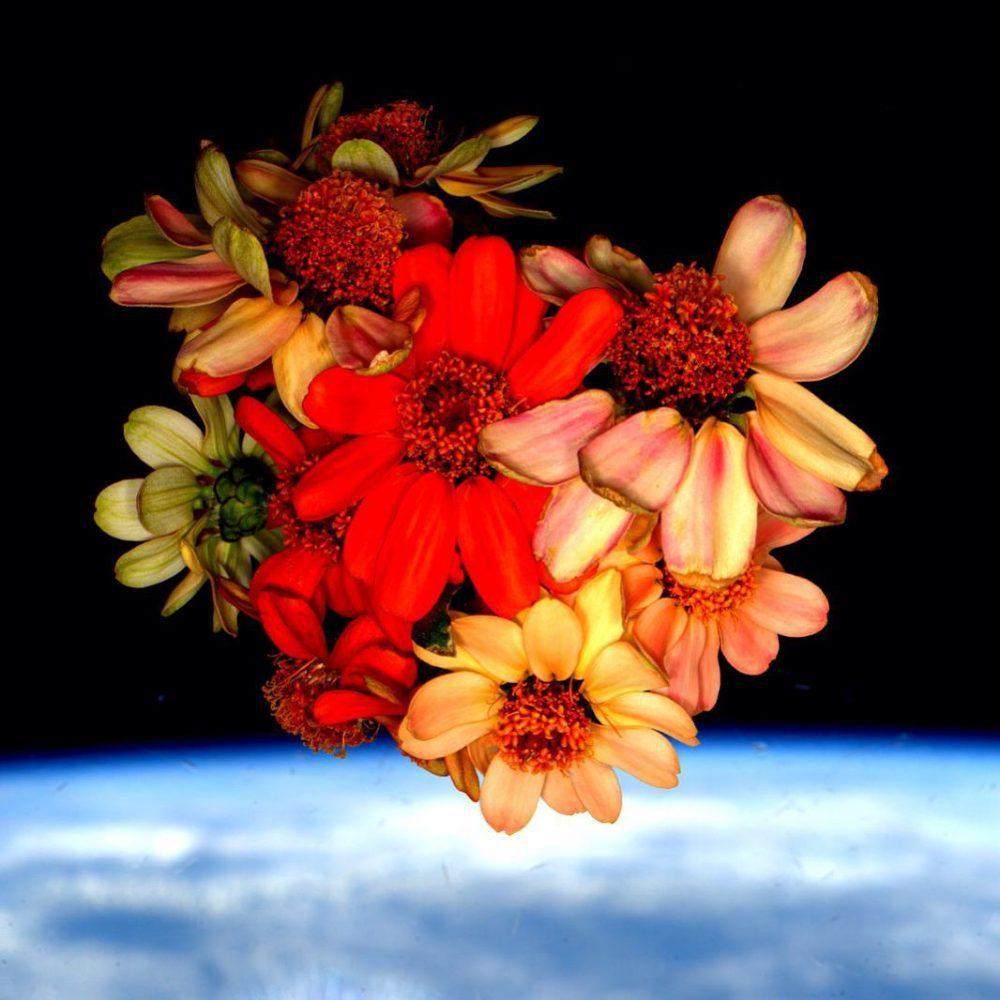 φυτά στο διάστημα