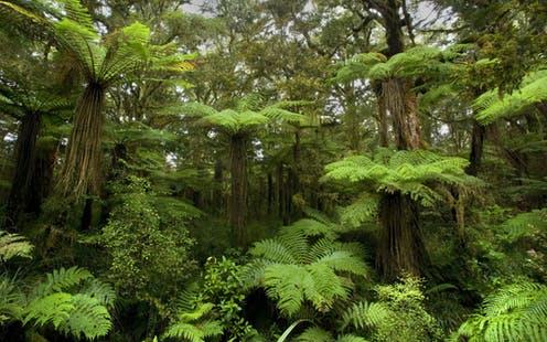 Τα ταχέως αναπτυσσόμενα δέντρα αποθηκεύουν λιγότερο άνθρακα ανά περιοχή επιφάνειας από τα παλιά, ανενόχλητα δάση που μπορεί να δείχνουν μικρή ανάπτυξη.