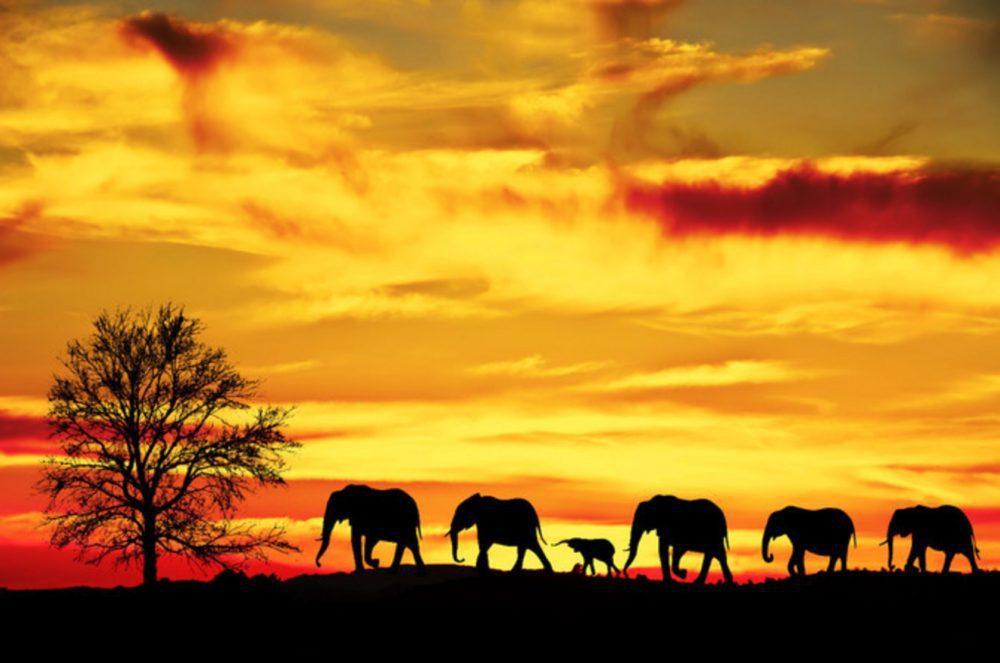Ελέφαντες στην Αφρική με ηλιοβασίλεμα