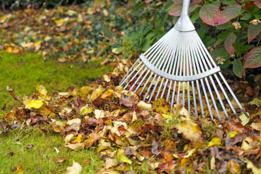 Πεσμένα φύλλα