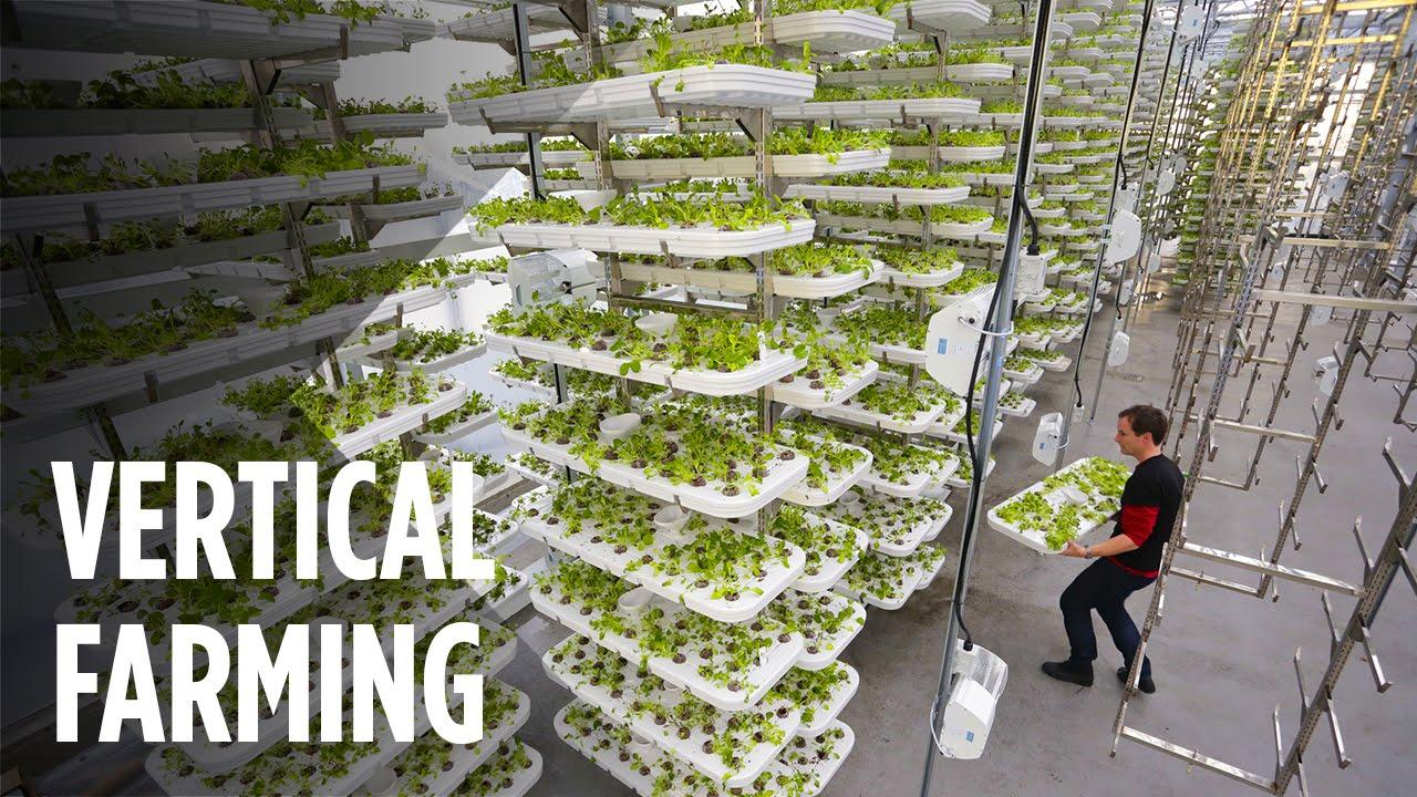 Vertical Farming: η κάθετη καλλιέργεια ως μέλλον ή ανάγκη;