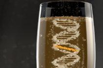 Καλλιτεχνική απεικόνιση μιας διασταυρούμενης σύνδεσης που προκαλείται από το αλκοόλ (ICL). Το ICL είναι η κίτρινη σύνδεση μεταξύ των δύο κλώνων DNA, καθιστώντας τα κολλημένα μεταξύ τους. Credit: Image copyright: MRC Laboratory of Molecular Biology or MRC LMB