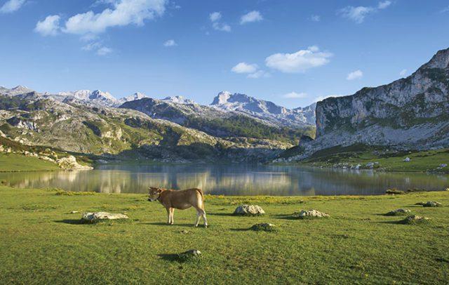 Εθνικό Πάρκο Picos de Europa
