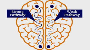Νευροπλαστικότητα: πόσο σημαντική είναι η συνδεσιμότητα μεταξύ των νευρώνων