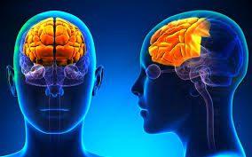Ο μετωπιαίος λοβός του εγκεφάλου