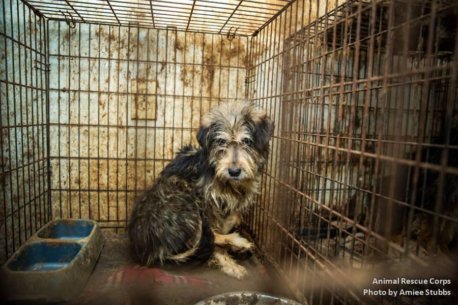 Puppy mills: Σκέψου καλά πριν αγοράσεις