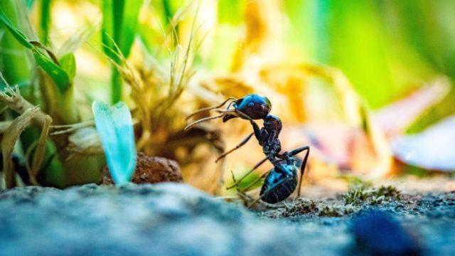 έντομα περιβάλλον