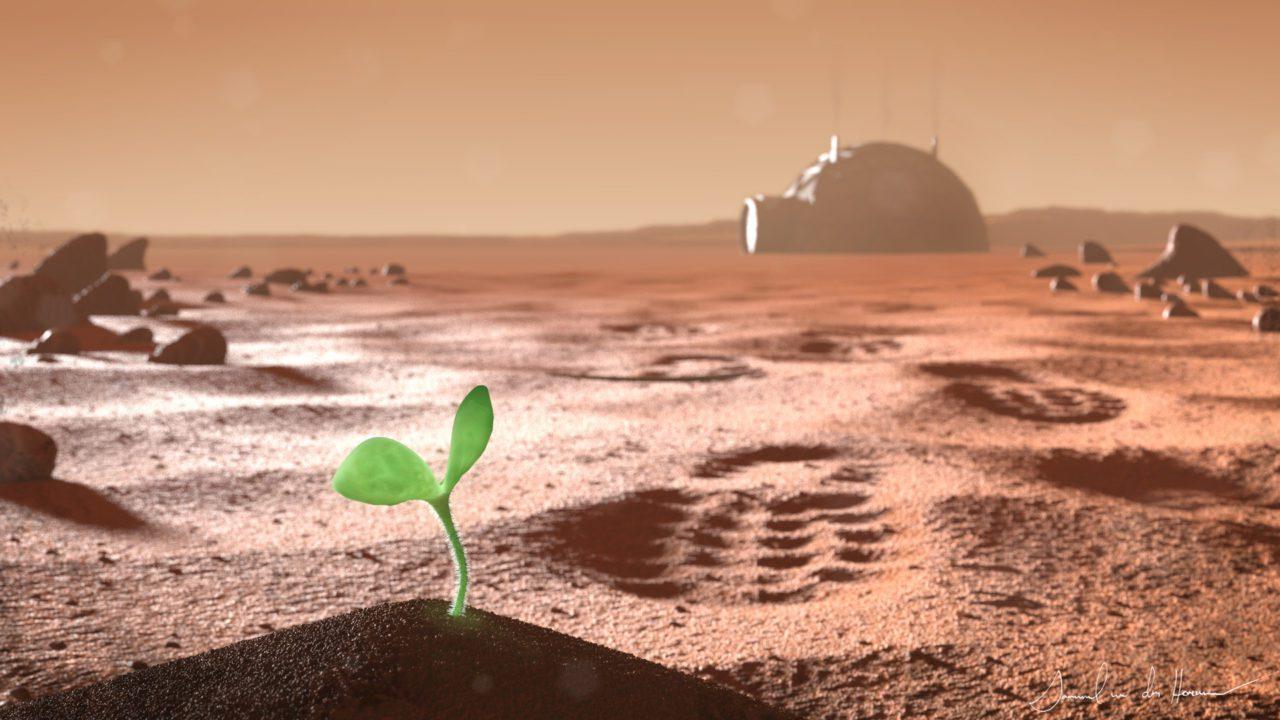 Φυτά στον Άρη: το πρώτο φυτό στον Άρη εκτός θερμοκηπίου