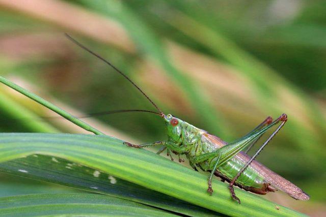 έντομα στο περιβάλλον