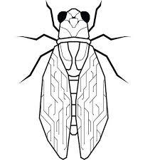 Tech Cicada