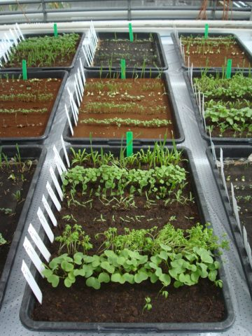 Φυτά στον Άρη: καλλιέργειες σε προσομοίωση αρειανού χώματος