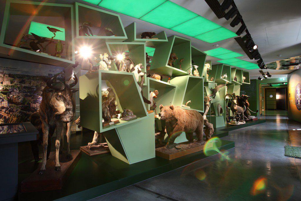 εθνικό μουσείο φυσικής ιστορίας Λουξεμβούργου