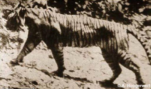 ζώα που εξαφανίστηκαν