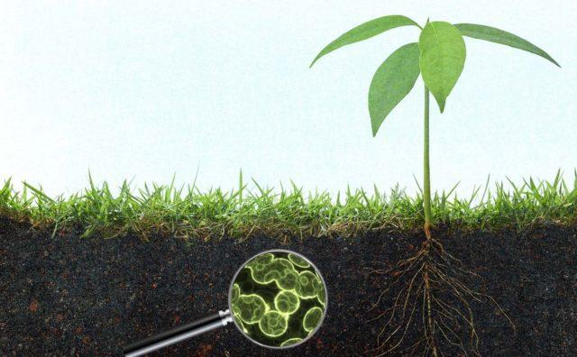 μικροοργανισμοί και περιβάλλον