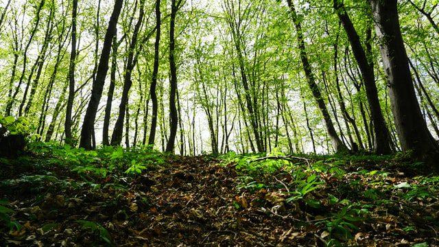 Τα Aιολικά πάρκα ή αλλιώς Αιολικοί Σταθμοί Παραγωγής Ηλεκτρικής Ενέργειας (ΑΣΠΗΕ) αποτελούν βιομηχανικές εγκαταστάσεις παραγωγής ηλεκτρικής ενέργειας. Το Ελληνικό Δίκτυο Natura 2000 αποτελείται απο 446 περιοχές. Η προβληματική που δημιουργείται έχει να κάνει με την αδειοδότηση που προσφέρεται στις εταιρείες αιολικής ενέργειας, για εγκατάσταση αιολικών πάρκων σε αυτές τις περιοχές.