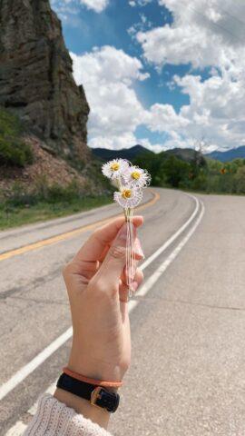 ζωή, πορεία, δρόμος
