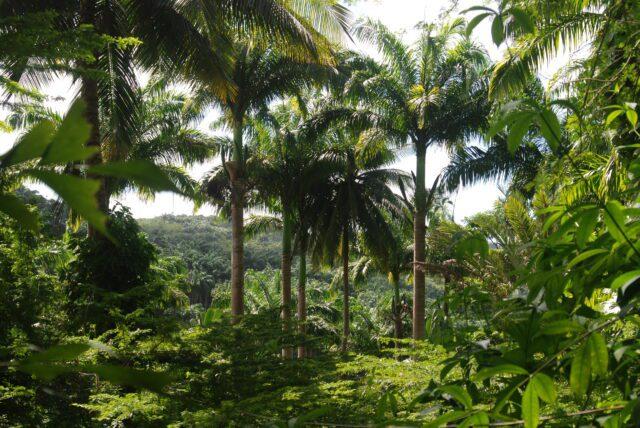 Μπαρμπάντος