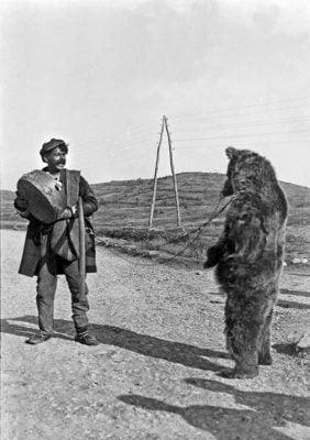 Εκπαίδευση της αρκούδας