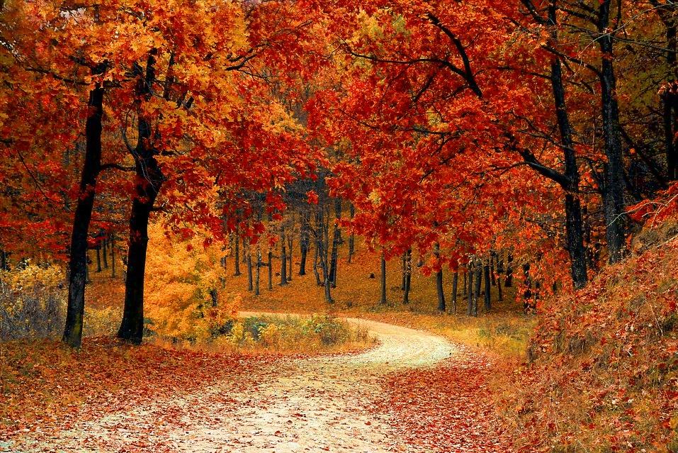 Φθινόπωρο. Πηγή: pixabay