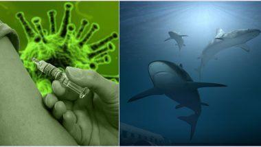 Καρχαρίες υπό απειλή για το εμβόλιο του κορωνοϊού