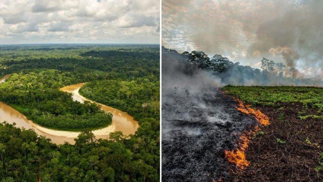 Επιστήμη και πολιτική - Αμαζόνιος
