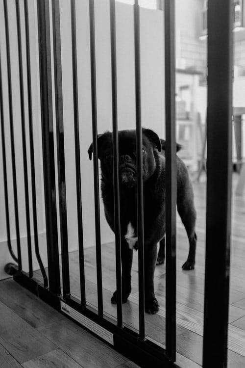 Κακοποίησης ζώων