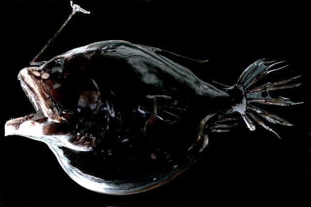 «Αόρατα» ψάρια στο βυθό της θάλασσας