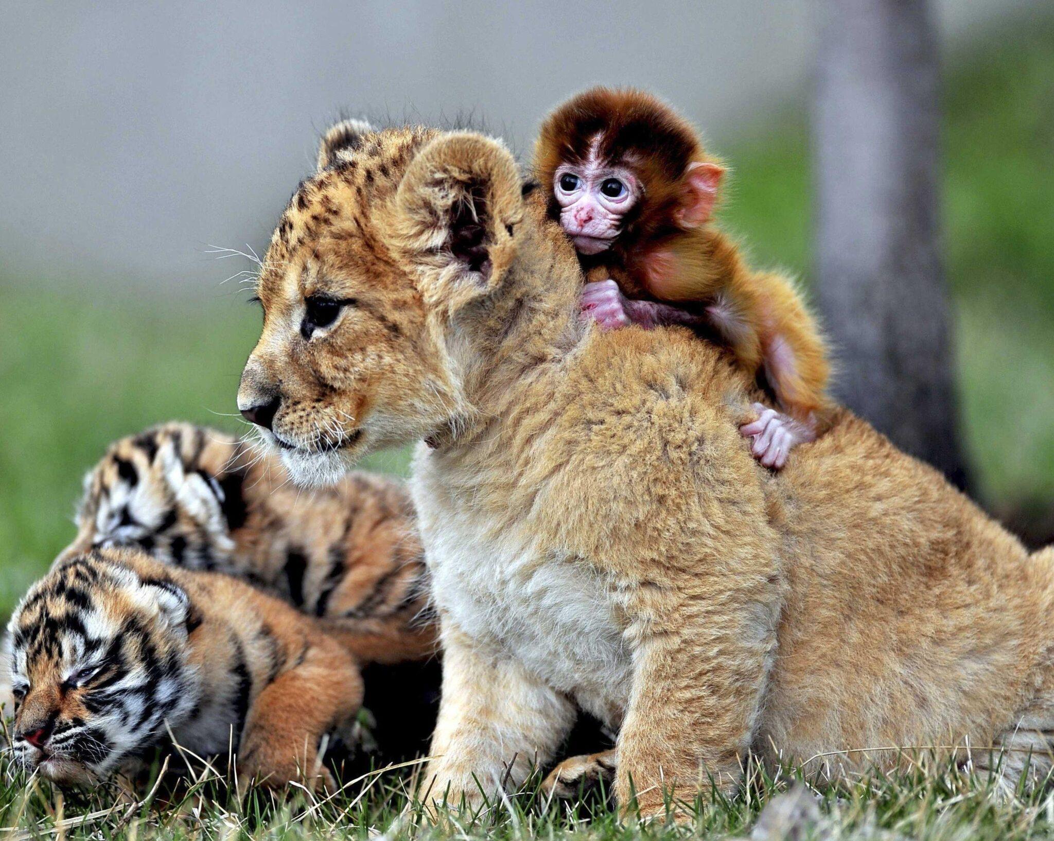 κοινωνική συμπεριφορά των ζώων