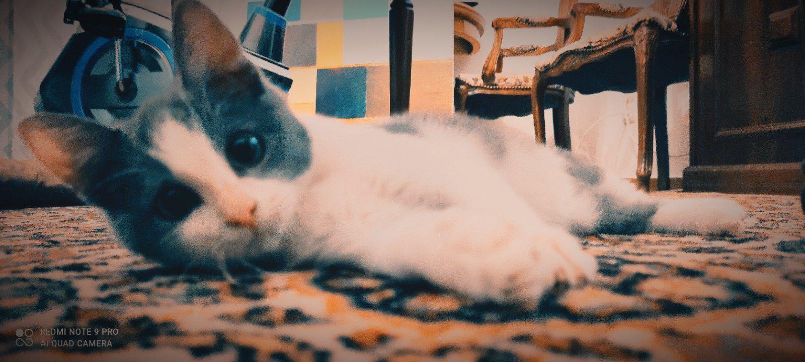 φιλοξένησε μια γάτα