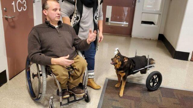 Bandit: Ο σκύλος σε αναπηρικό αμαξίδιο που υιοθετήθηκε από άντρα σε αναπηρικό αμαξίδιο
