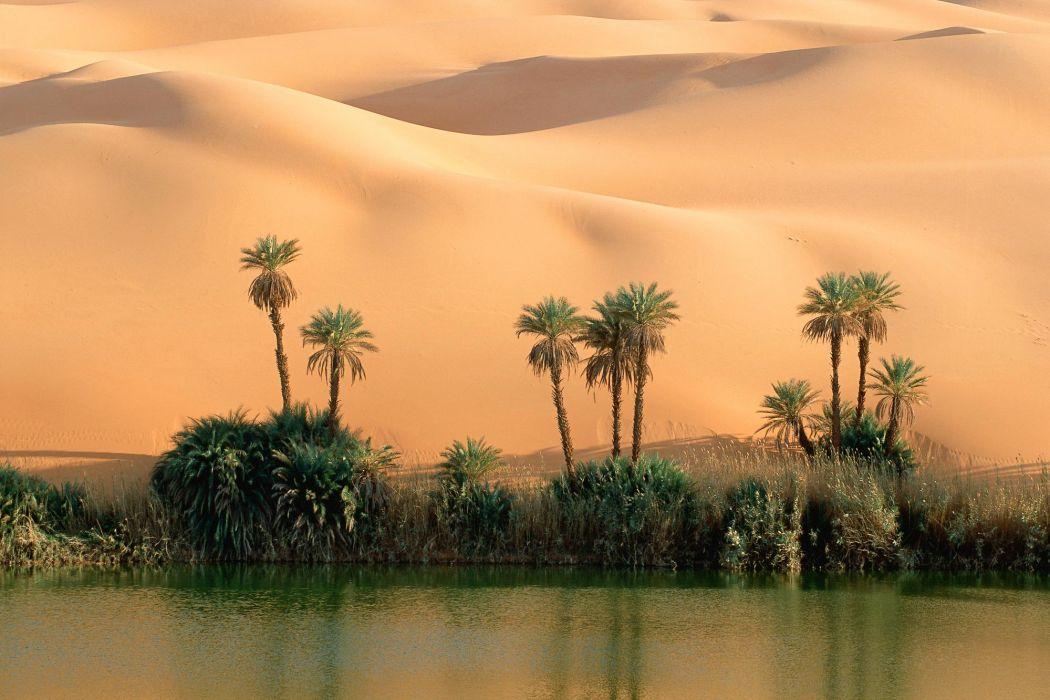 το οικοσύστημα της ερήμου
