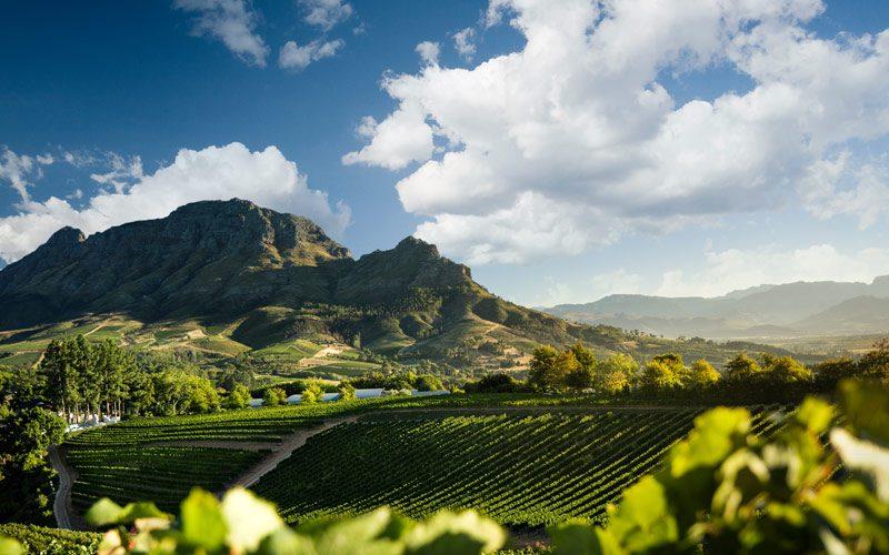 Κοιλάδα του κρασιού στην Νότια Αφρική