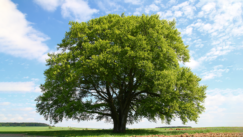 προσφορά των δέντρων