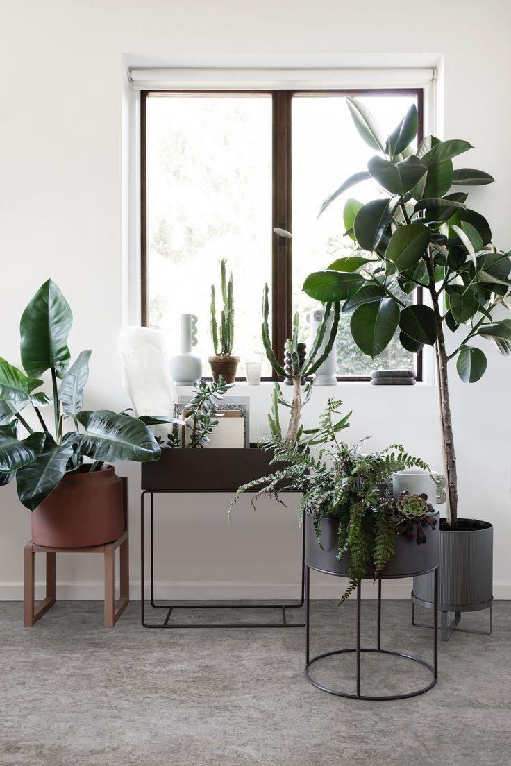 φυτά ως διακόσμηση