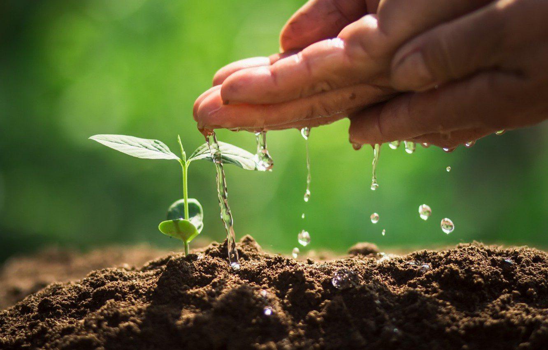 η προσφορά του εδάφους στο οικοσύστημα