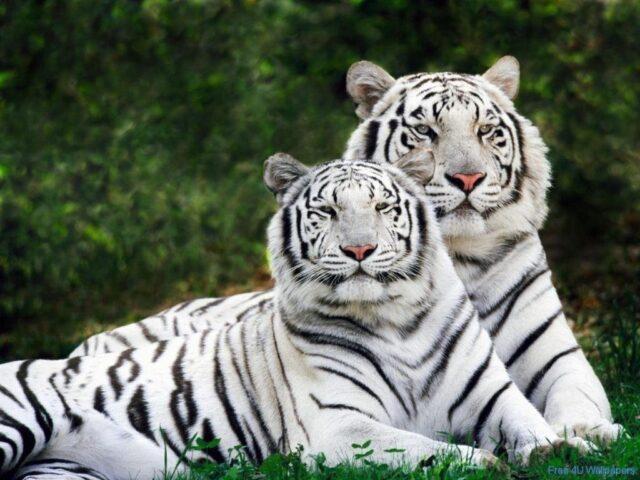συνέπειες της πανδημίας στα ζώα