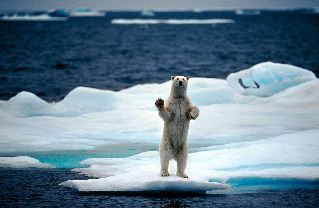 πολική αρκούδα πάνω σε κομμάτι πάγου