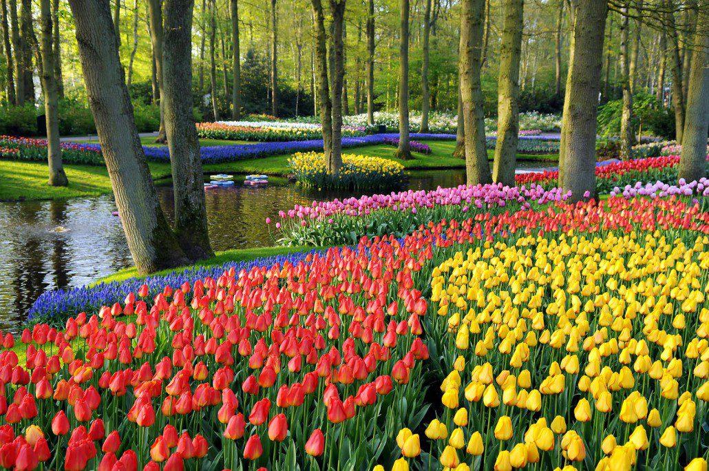 Keukenhof Gardens ανοιξιάτικοι κήποι
