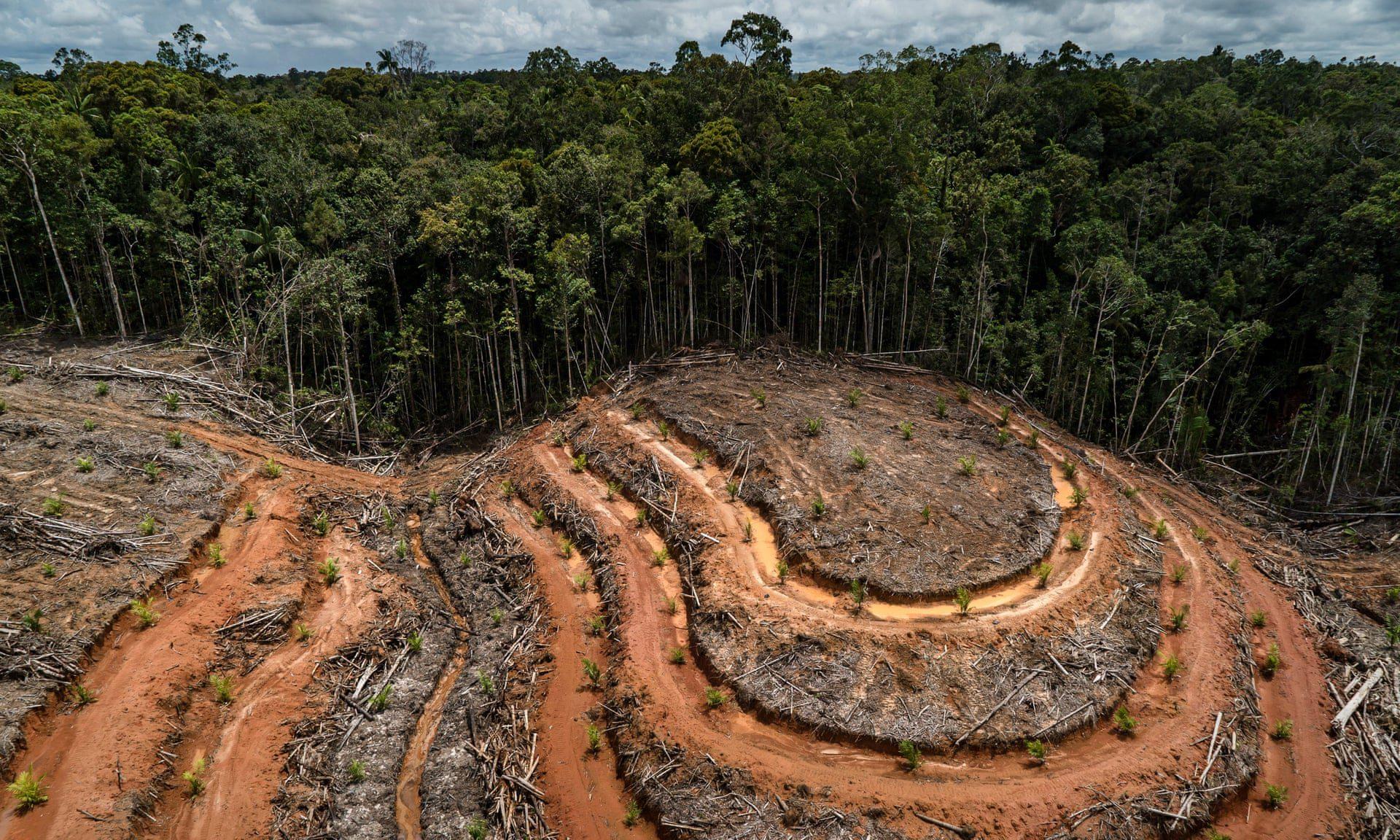 αποψίλωση των δασών