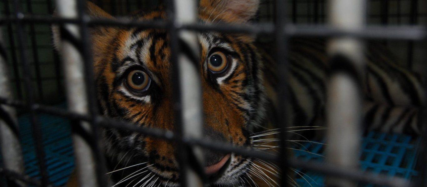 παράνομο εμπόριο άγρια ζωής