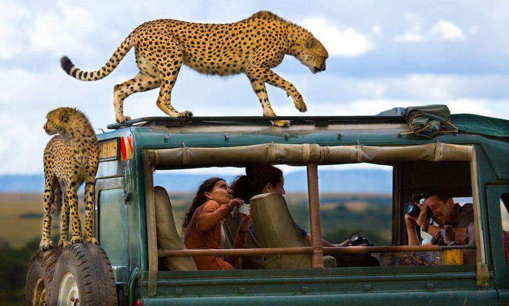 Η ζούγκλα στο εθνικό πάρκο Masai Mara της Κένυας